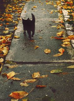 Savoring Autumn, cute little black kitten Crazy Cat Lady, Crazy Cats, I Love Cats, Cute Cats, Gatos Cats, Mundo Animal, Here Kitty Kitty, Samhain, Fall Halloween