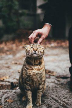 10/10 good cat.