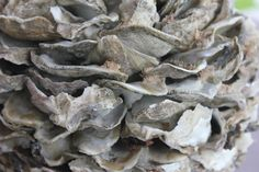 Decorative Oyster Shell Ball