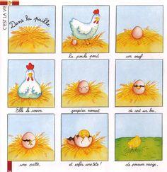 De kip en het ei cyclus - de la poule à l'œuf... een proces of kringloop. de…