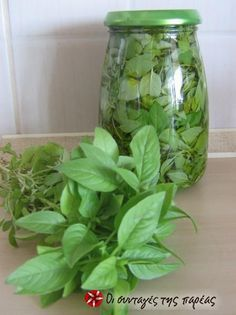 Great recipe for Fresh basil throughout the winter. How to have fresh basil throughout the winter! Fresh Basil, Fresh Herbs, Cooking Tips, Cooking Recipes, The Kitchen Food Network, Kitchen Herbs, Greek Cooking, Basil Leaves, Greek Recipes