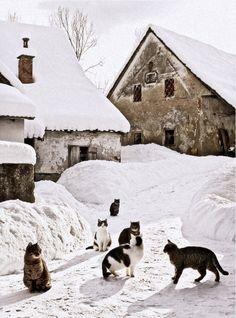 Gatitos en la nieve