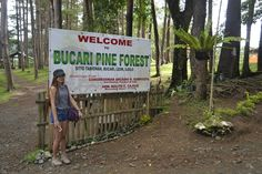 <p>Bucari is located in the mountains of Leon, Iloilo. It is known as Iloilo's little Baguio because of the climate. Bucari also possess a breath taking view. You can camp or picnic with your friends under these beautiful pine tress.…</p> Baguio, Take A Breath, Pine Forest, Picnic, Places To Visit, Camping, Mountains, Friends, Beautiful