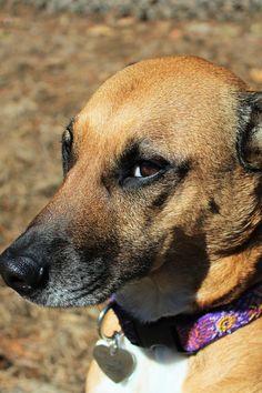Brown and White Short Coat Medium Size Dog