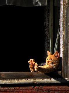 Расслабляйся как кот)))