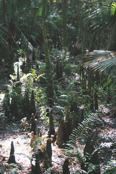Photos from Highlands Hammock State Park