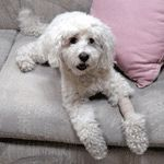 First Aid Tips for Pet Owners - What would you do if...? Tips and resources from the American Veterinary Medical Foundation (AVMF).