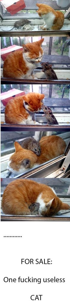 Real life of Tom  Jerry