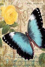 Resultado de imagen para pinterest fotos de mariposas