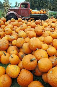 You Glad It's Pumpkin Season? Orange You Glad It's Pumpkin Season? – Everyday LivingOrange You Glad It's Pumpkin Season?