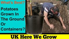 What's Best. Potatoes Grown In The Ground Or Containers? The Big Experim...