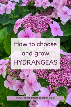 If you're landscaping your garden, then include hydrangeas. They give you months of colour and structure! #middlesizedgarden Hydrangea Potted, Hydrangea Varieties, Smooth Hydrangea, Types Of Hydrangeas, Hydrangea Colors, Smart Garden, Easy Garden, Low Maintenance Garden Design, Hydrangea Quercifolia