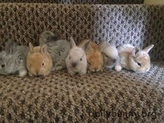 Bunnies stand for a lineup photo... kind of - September 5, 2016
