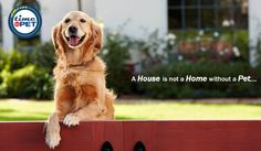 """""""Quote of the day"""" #timeforpet #dogs #dog #doglove #doglovers #animallovers #animals #animallove #quotes #animalquotes #quoteoftheday #petcare #petlove #pet #pets #bangalore #thursday"""