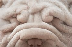 oh how sweet - wrinkle face