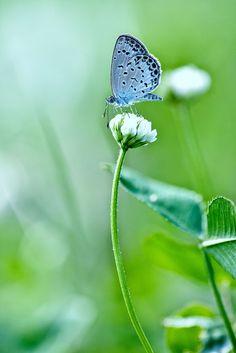 White Flower & Pretty Blue Butterfly