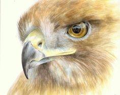 Red tailed hawk painting. Hawk painting. Hawk eyes. by madareli