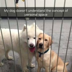 Morning Funny Animal Pictures 25 Pics