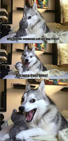Meme Watch: Pun Dog Isn't Fat, He's Just A Little Husky  Order an oil painting of your pet now at www.petsinportrait.com