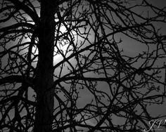 Nature Photography Moonlit Tree Silhouette Black and by DesignByJV, $15.00