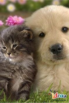 ¡Mascotas en el hogar,todo lo que debes saber!#FengShui