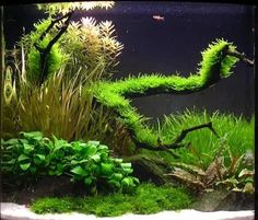 aquascaping with river rocks - Google Search
