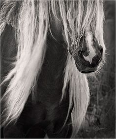 a beautiful wild horse on Sable Island National Park Reserve of Canada (Atlantic coast)