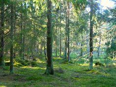 Selinas Ekologiska Meze. Strolling in the forest