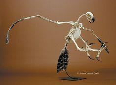 This is cool Harpy Eagle Skeleton Skeleton Photo, Skeleton Bones, Skull And Bones, Skull Reference, Anatomy Reference, Animal Skeletons, Animal Skulls, Human Skeleton Anatomy, Bird Bones