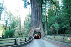 weirdest trees on earth