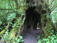 Oswald West, between Manzanita and Cannon Beach. You are required to walk 1/4 mile through an ancient forest, along a river path, before you reach the beach. If you are a fan of mossy tree stumps, this is the place to go.