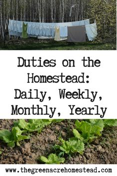 Duties on the Homestead Daily, Weekly, Monthly, Yearly is part of Homesteading skills - When I first started homesteading I always wondered what other homesteaders' duties were Well, here are the tasks I aim to achieve on my homestead! The Farm, Mini Farm, Small Farm, Off Grid Homestead, Homestead Farm, Homestead Gardens, Homestead Layout, Homestead Living, Homestead Survival