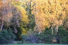 Autumn trees in Maxwell Park, Pollokshields, GLASGOW. SCOTLAND
