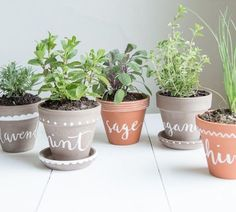 painted pots for herbs on window sill.