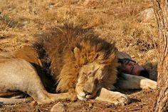 sleeping together-Kevin Richardson