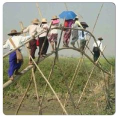 The type of bridges our brothers and sisters have to cross in order to go preaching in another village Delta area in Myanmar @jw_pioneers