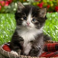 Today's cutest kitten award goes to……