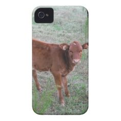 Baby Brown Cow . iPhone 4 Covers