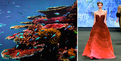 great_barrier_reef_photos01