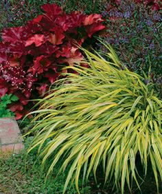Thin or needlelike foliage: The elongated shape of plants, like 'Aureola' Japanese forest grass (Hakonechloa macra 'Aureola', Zones 5–9) and 'Caledonia' hebe (Hebe 'Caledonia', Zones 8–10), gives the landscape a billowy appearance.
