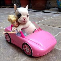 Frenchie? Boston? Doesn't matter, cute puppy with a fat tum-tum hugging Barbie in a Barbie car.