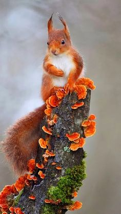 SQUIRREL CITY!!! The heartbeat of America..... :)