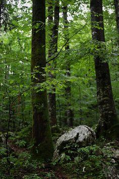"""bisexualpiratequeen: """"Untitled - Triglav National Park, Slovenia by Sarah Gallaun on Flickr. """""""