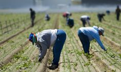 Biting the Hands Who Feed Us: Farmworker Abuse in the U.S. | FoodTank.com