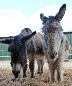 Queen with best friend Brandy @islandfarmdonks http://www.donkeyrescue.co.uk/adopt-queen
