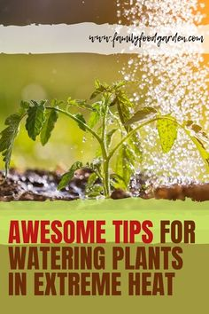 Here are some awesome tips you need to know for watering your plants in extreme heat! We are going to be looking at the dos and don'ts of watering plants in the summer heat and how to keep your plants happy and healthy. In order to maintain your garden through the tough summers, you will need to follow some basic steps. Check this pin and let us know what you think! #wateringplants #gardening #wateringgarden Self Watering Containers, Watering Plants, Container Gardening, Gardening Tips, Indoor Gardening, Vegetable Gardening, Flower Gardening, Indoor Plants, Water Irrigation