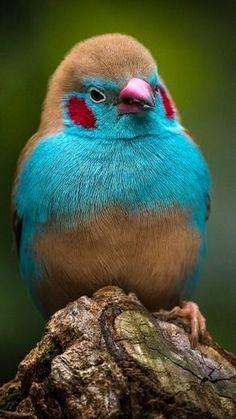 10 Beautiful and Colorful Birds All Birds, Cute Birds, Pretty Birds, Little Birds, Birds Of Prey, Beautiful Birds, Animals Beautiful, Angry Birds, Beautiful Pictures