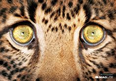 MAG-LITE: Leopard Advertising Agency: M&C Saatchi Abel, South Africa Art Director: Nick Liatos Copywriter: Mick Shepard Additional credits: Rex Truter Published: April 2014