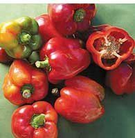 "Seed Savers Exchange 1466 50-Pack Open Pollinated Pepper Seed, Bull Nose Bell by Seed Savers Exchange. $5.88. 55-80 days from transplant; sweet. Crisp fruits ripen from green to red with an excellent flavor. Productive, sturdy plants. Grown at monticello by thomas jefferson and listed in 1863 by fearing burr. Capsicum annuum sow seeds indoors 1/4"" deep. peppers germinate best in warm soil, so gentle bottom heat may be helpful until seedlings emerge. wait to trans..."