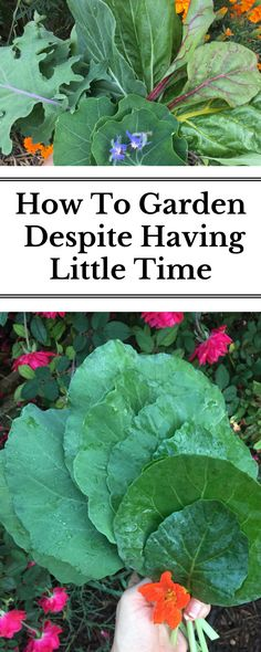 Hear from TEN busy people how to garden despite your jam-packed schedule!